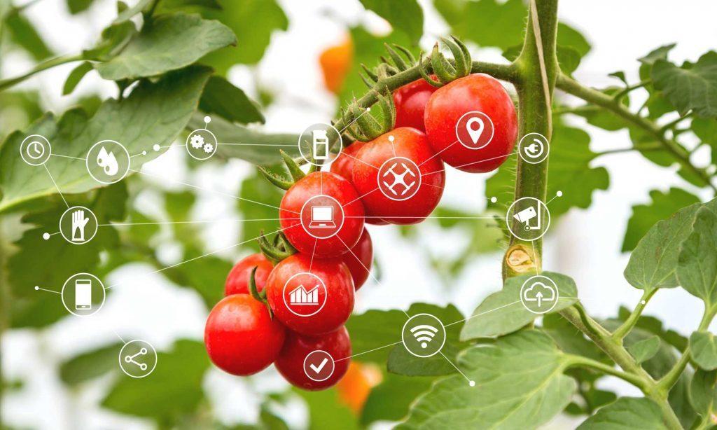 tomato-tech4-1024x614